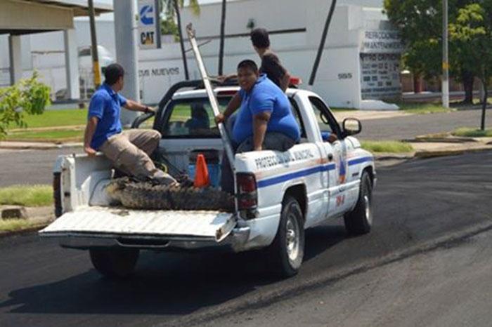 Foto Cortesía. El director de Protección Civil Municipal hizo un llamado a no intentar capturar a esta especie para evitar ser víctimas.