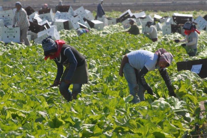 Foto: Agencias. De expulsar a tres millones de extranjeros, también saldrían afectadas las industrias estadounidenses.