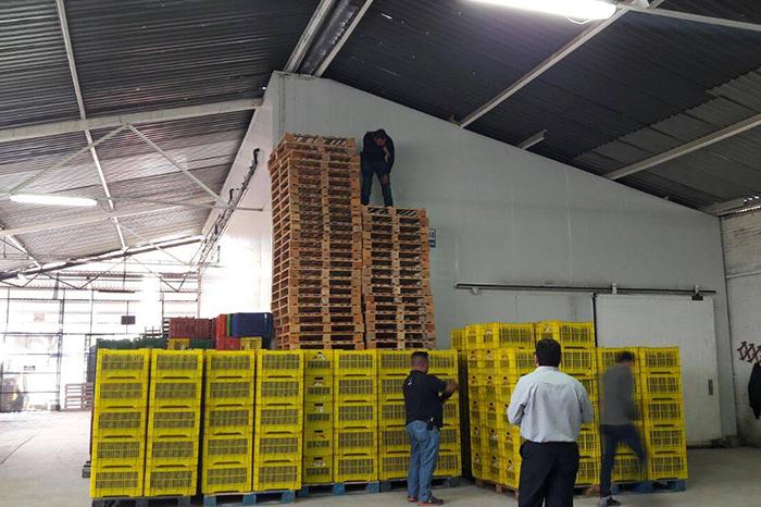 URUAPAN Libera PGJE a camionero privado de la libertad y recupera más de 7 toneladas de aguacate robado (3)