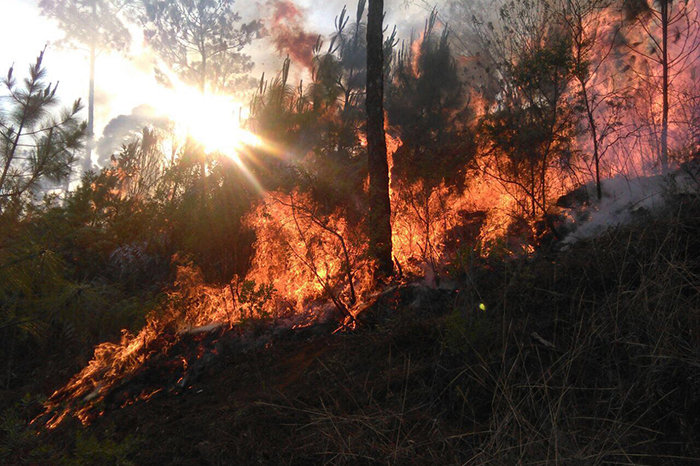 incendio forestal (3)
