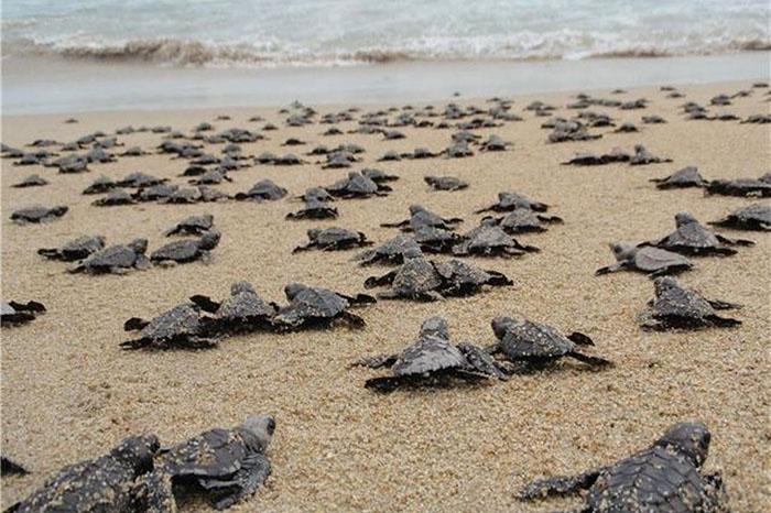 tortugas