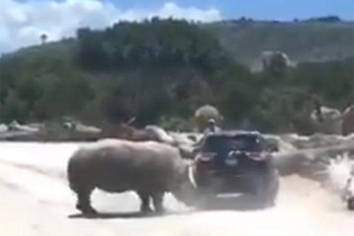 rinoceronte golpea una camioneta