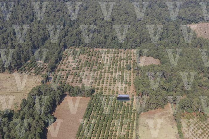 terreno del municipio de Hidalgo era deforestado