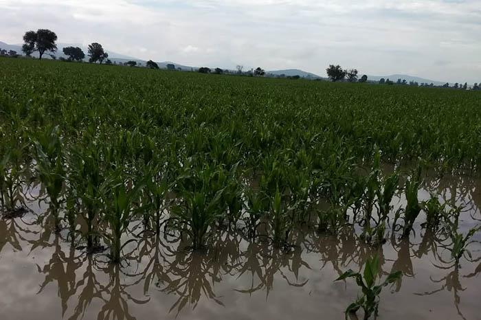 cultivos dañados