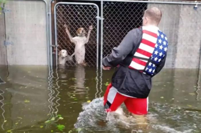 rescatan a perritos