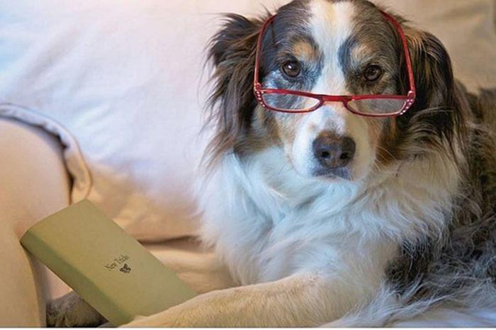 sintomas de que tu perro está envejeciendo