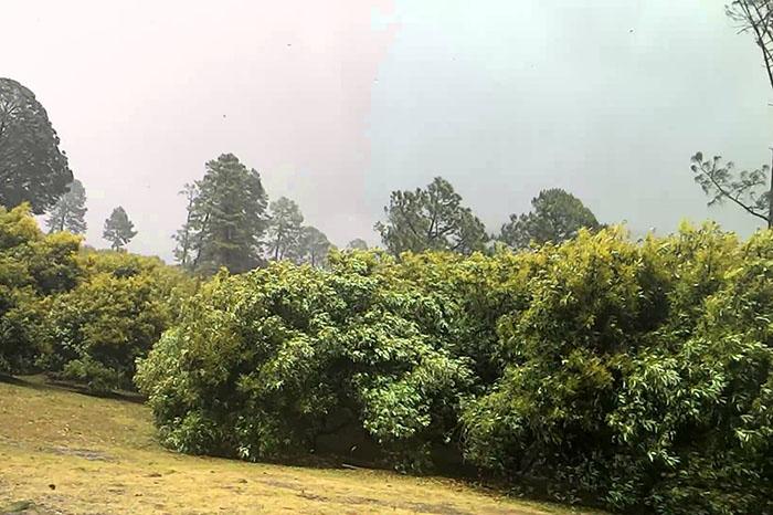 La temporada de lluvias en Uruapan no han dejado secuelas mayores en las casi 100 mil hectáreas de los 10 municipios