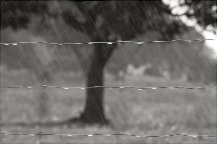 fuerte-lluvia-d413f306-798d-4702-b847-feb9ab49f907